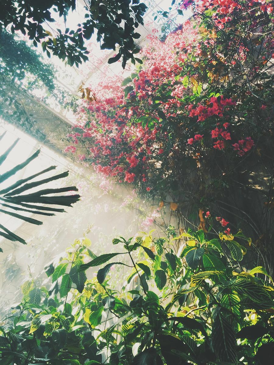 ガーデンで森林浴